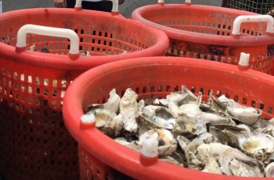 The World Is Not Your Oyster…Unless You Recycle the Shell